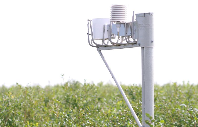kwitnące truskawki, szara pleśń, ochrona truskawek, stacja meteo dla truskawek borówek