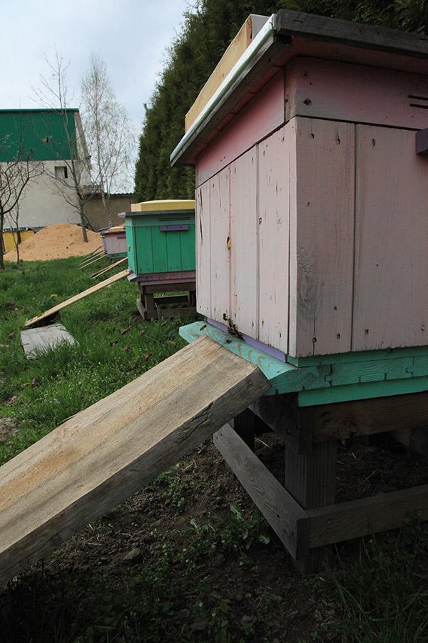 pszczoły w jagodowych, pszczoły w truskawkach