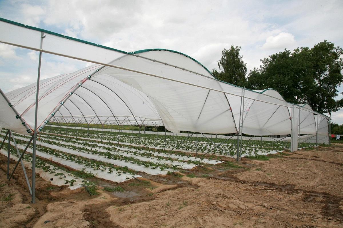 uprawa truskawek w tunelach, tunele dla truskawek