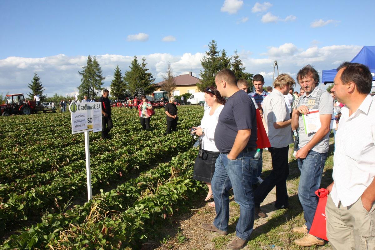 Grupa truskawkowa, nawożenie truskawek, uprawa truskawek, truskawki, truskawka, osadkowski, jagodnik.pl