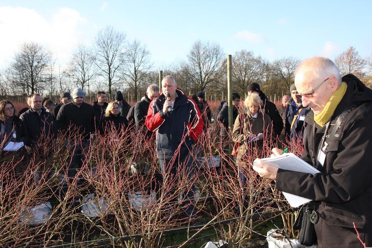 Willem van Eldik, DLV Plant, borówka wysoka, uprawa borówki wysokiej
