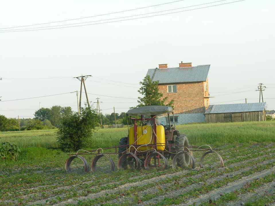 Sprawdzone i proste sposoby uprawy truskawek