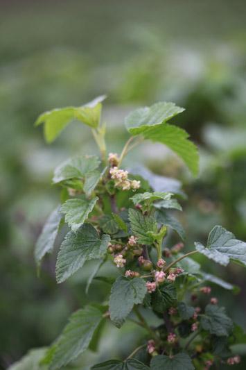 aktualności, Polska, majowe przymrozki, regeneracja roślin