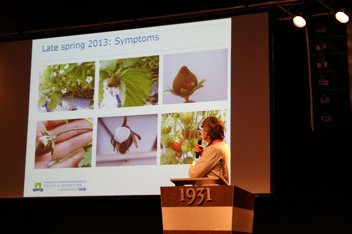 Informacje na temat nowego patogenu truskawek z grupy Erwinia przedstawił Marcel Wenneker ze Stacji Doświadczalnej w Wageningen z Holandii