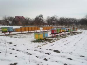 jagodnik_truskawka_malina7