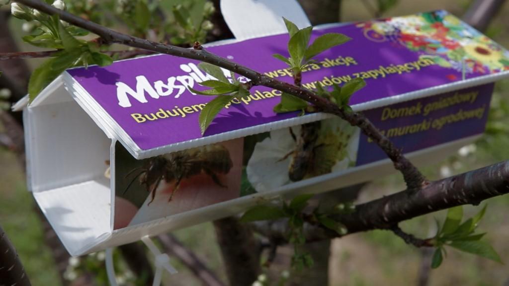 W ramach tegorocznej kampanii Sumi Agro Poland przekaże 1000 domków z gniazdami murarki ogrodowej