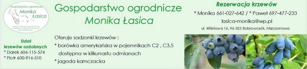 lasica