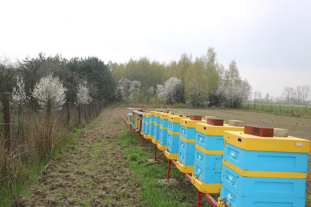 Ule ustawione w rzędzie przyszłego sadu wylotkami na wschód