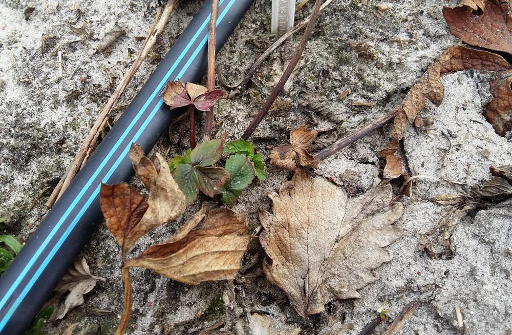 Tak wyglądały rośliny po zimie - 21 marca