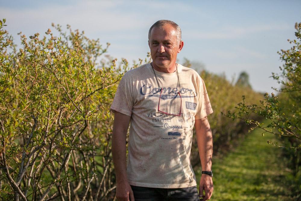 Ireneusz Wąsiewicz stara się prowadzić plantacje borówki jak najlepiej