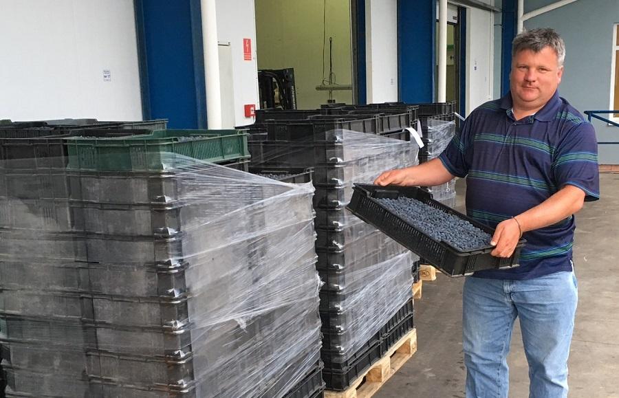 Piotr Trawicki w tym roku realizuje pierwsze dostawy jagody kamczackiej dla firmy CPM