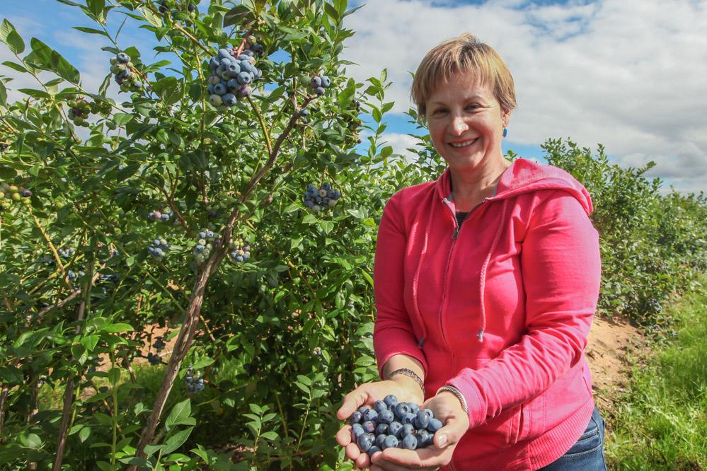 Hanna Moscardo Malinowski cieszy się z wyjątkowej jakości tegorocznych borówek