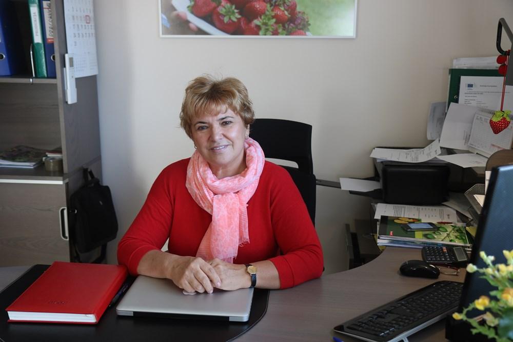Krystyna Dominikowska w swym biurze