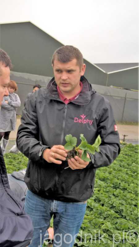 2)Krzysztof Żabówka doradca firmy Delphy omawia zalety sadzonek typu doniczkowego