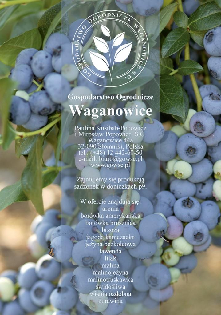 waganowice